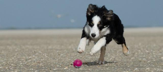 Spiagge per cani in Sicilia