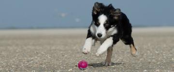 IMG In vacanza con Fido - Spiagge per cani in Sicilia 2019