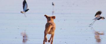 IMG Vacanze con il cane in Sicilia 2018 - Hotel, spiagge e info